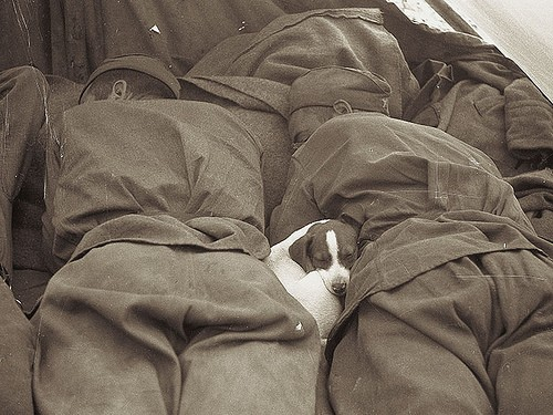 puppy-sleeping-inbetween-russian-soldiers-1945