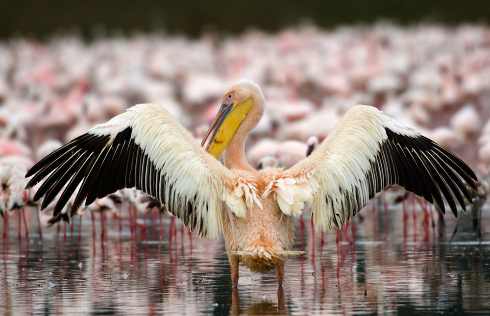 Lake_Nakuru_National_Park_019