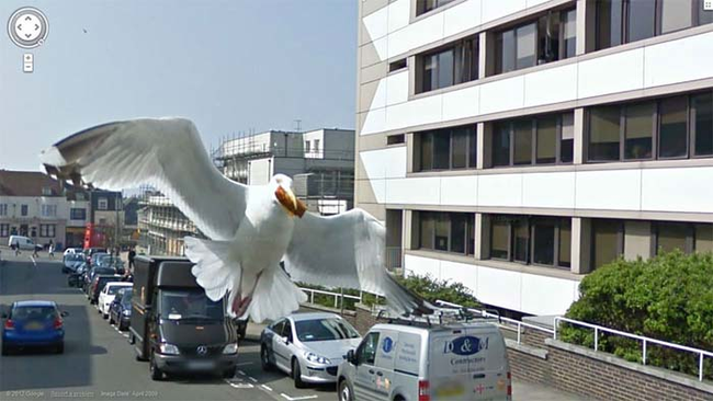 google-maps-seagul-in-the-way