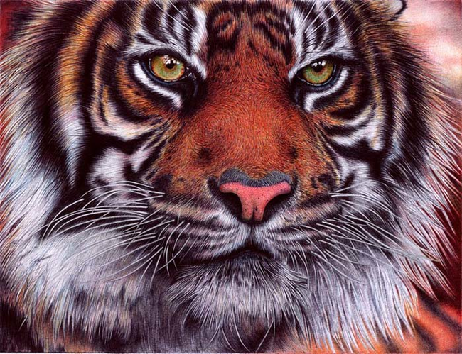tiger-pen-artwork