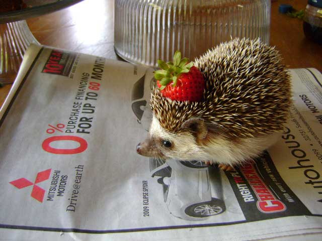 hedgehog with strawberry for a hat