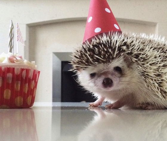 hettie-the-hedgehog-with-her-hat-on