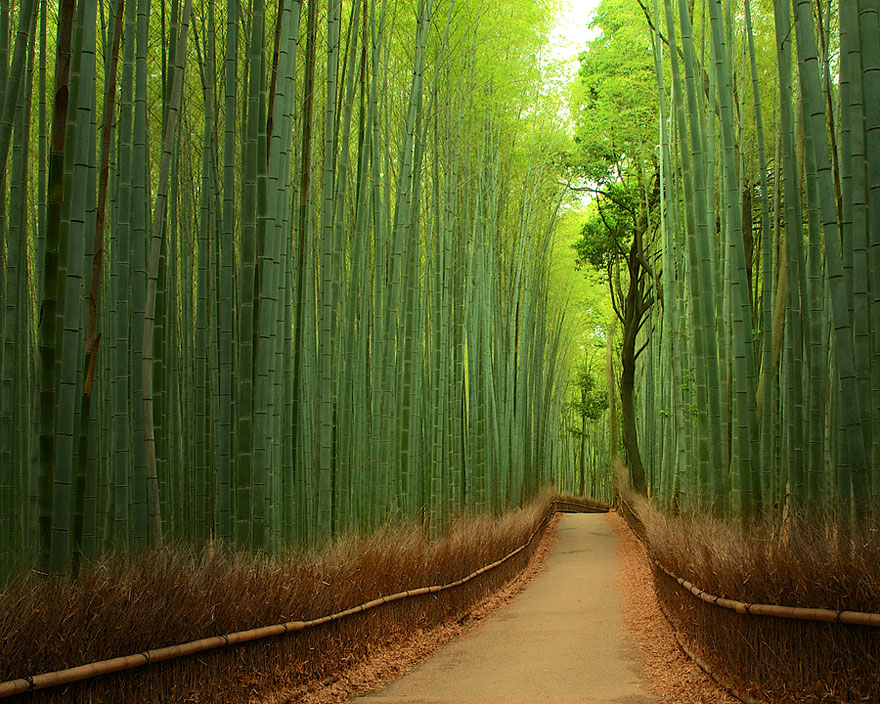 Bamboo Forest, Japan-unbelievable-places